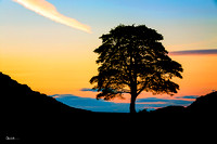 """Sycamore Gap - Sunset Silhouette"""